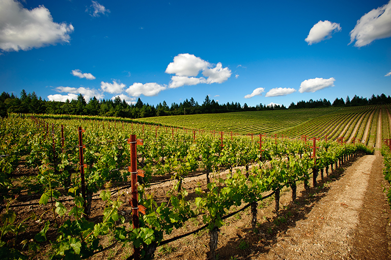 Five Chefs in the Vineyard